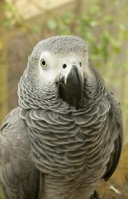 schemes-parrot